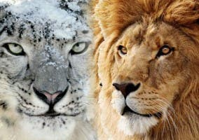 Apple-OSX-Lion-Snow-Leopard