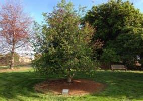 Árbol de Pixar en homenaje a Steve Jobs