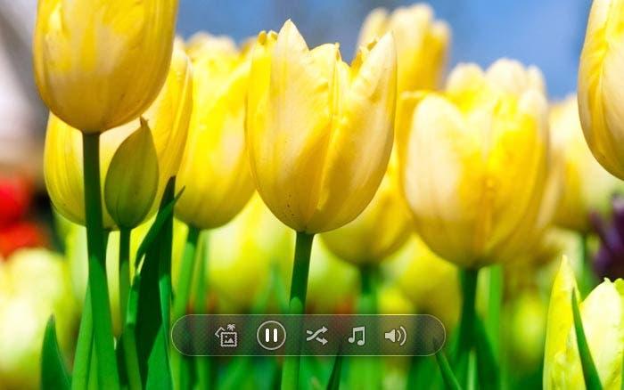 Modo a pantalla completa de Photo+