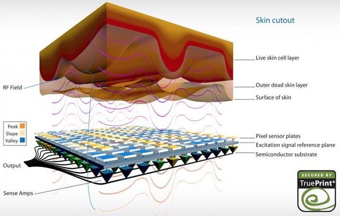 Capas del sensor biométrico del iPhone 5S