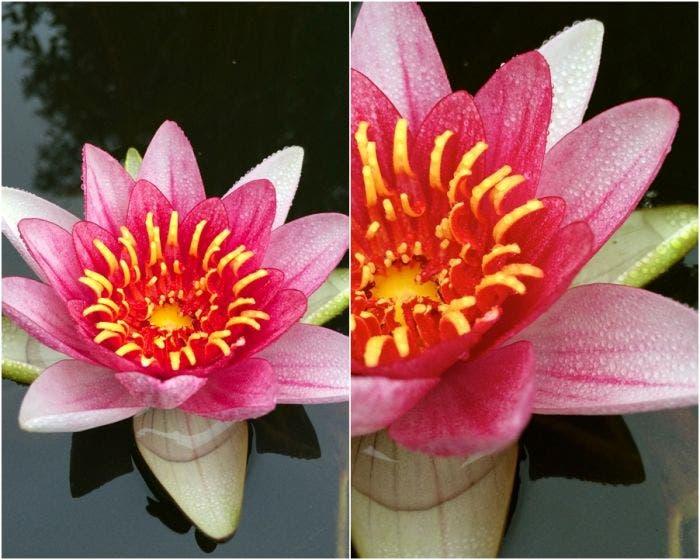 Fondo de pantalla Water Lily